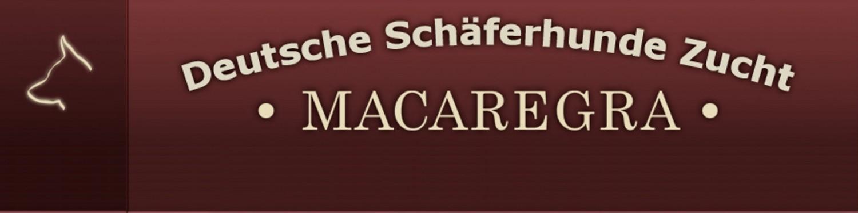 DSH vom Zwinger MACAREGRA